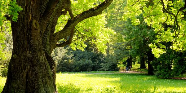tree removal guarantee