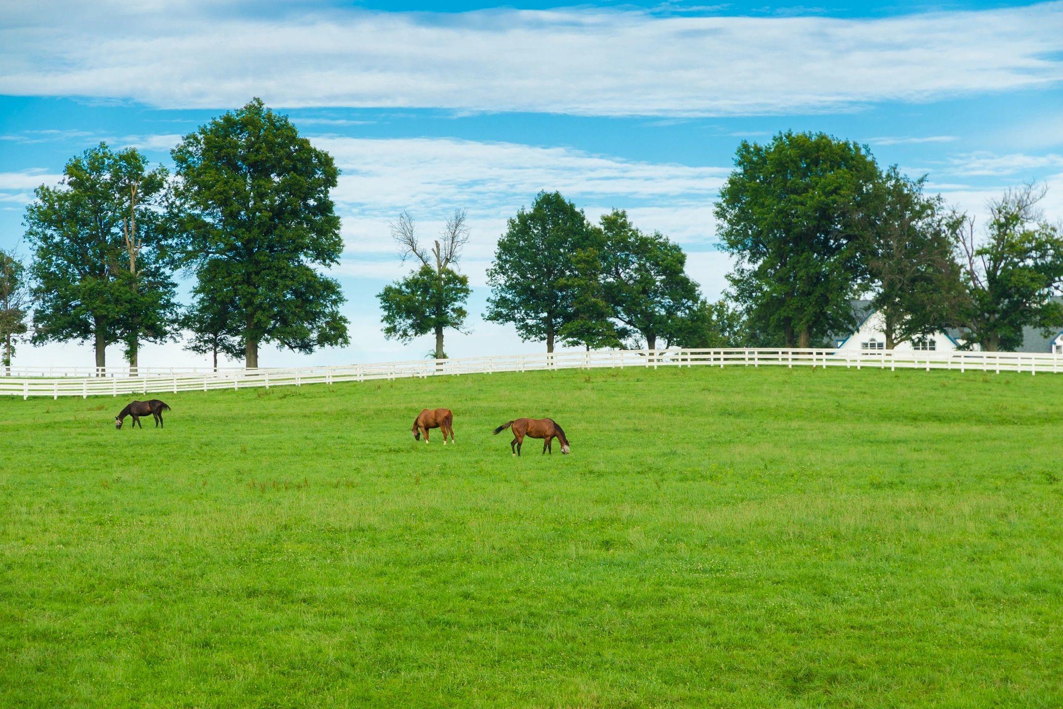 Implements, farm tractors - Smiths Enterprise - Goldsboro, North