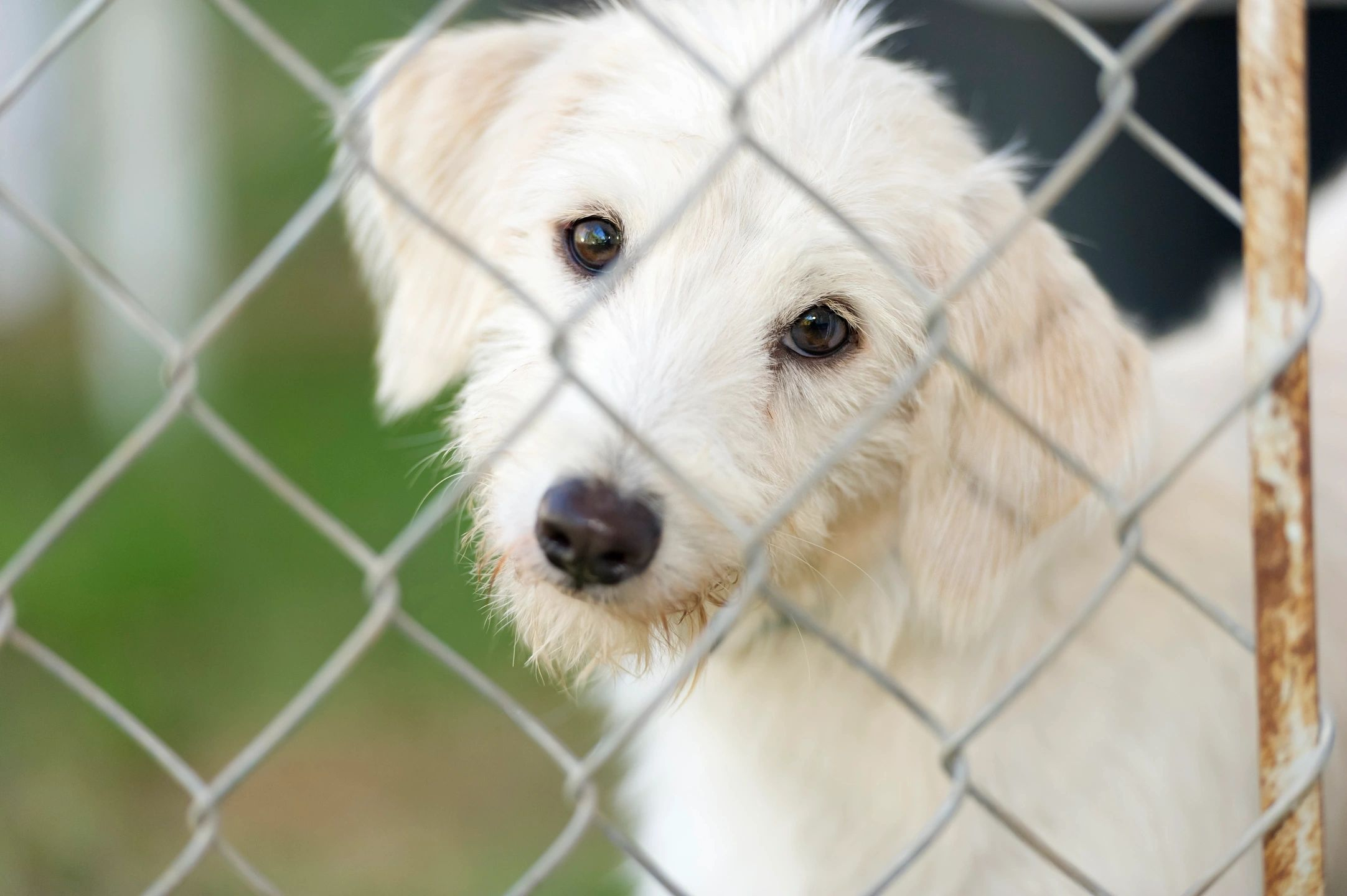 Focus On Cumberland County Animal Shelter - Home