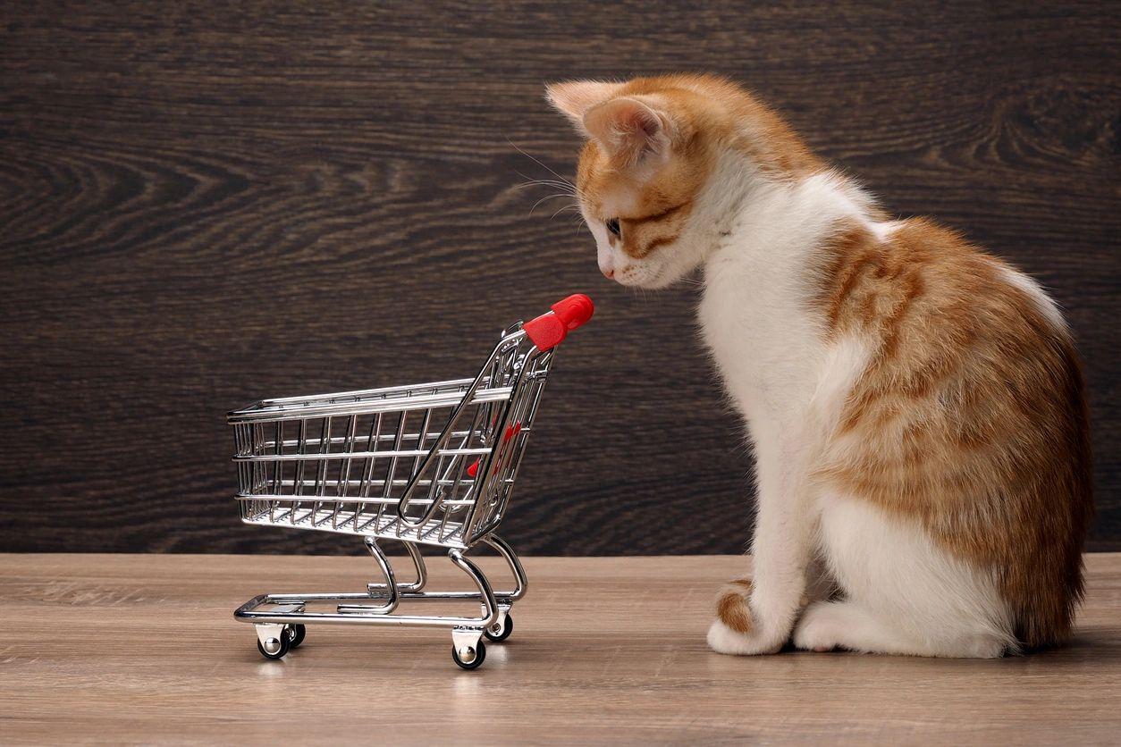 Pet Store, Pets - Hometown Pets - Florence, Oregon