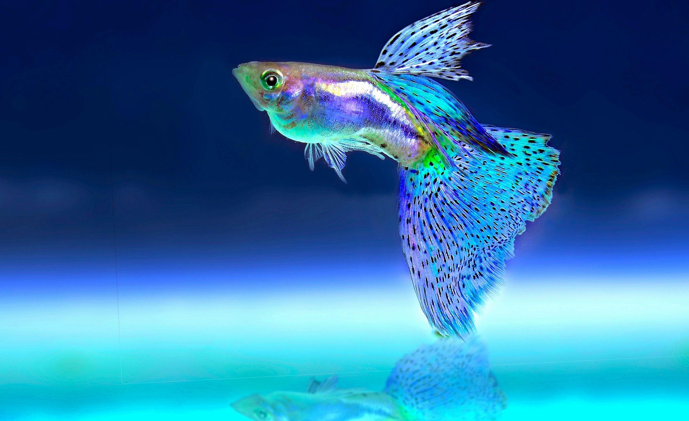 AL ARBEAA ORNAMENTAL FISH TR LLC