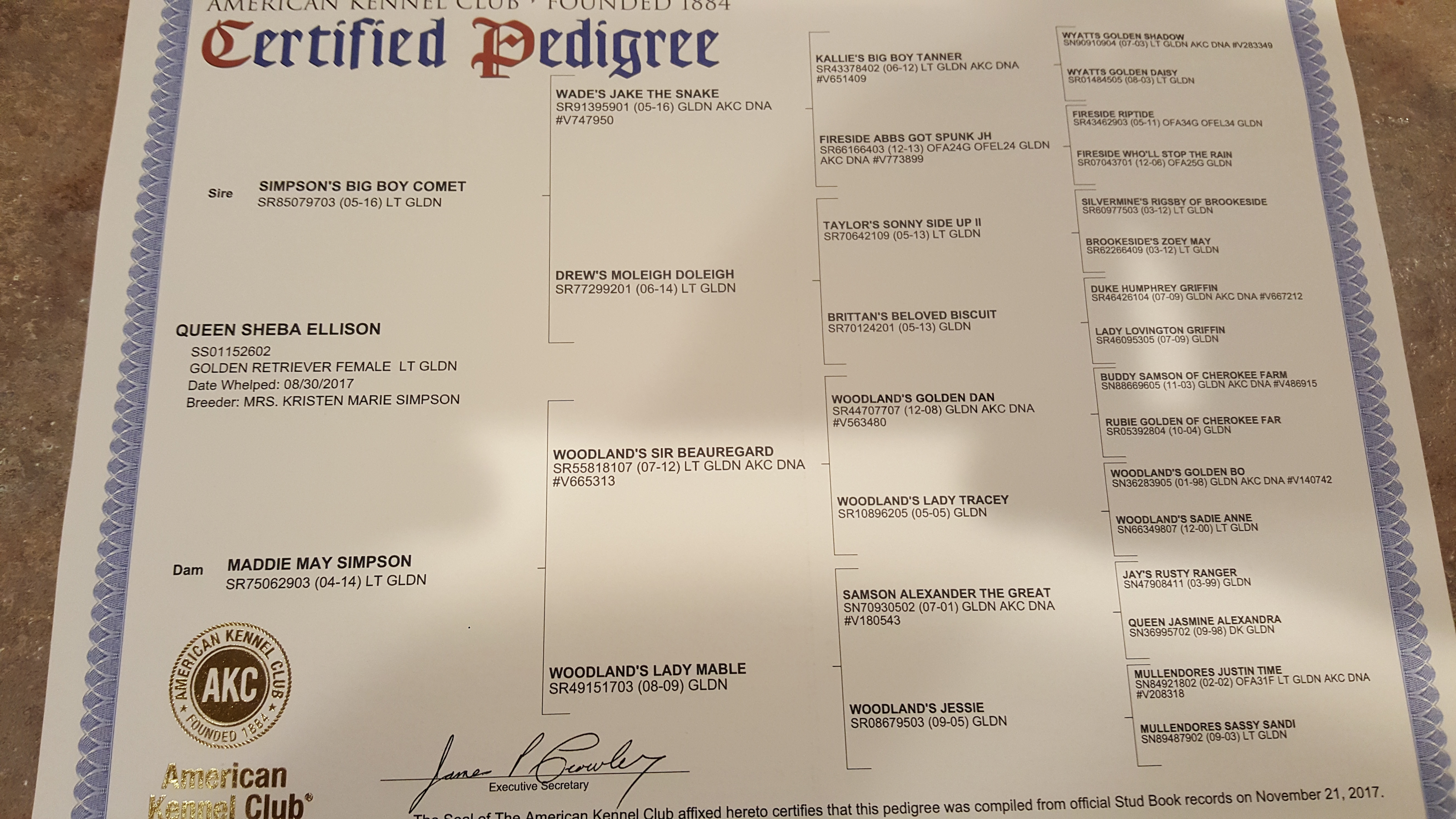 Our Certificates | D&J Golden Retriever puppies
