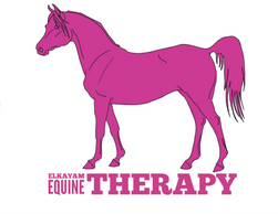 The Art of reading the equine body  2 day clinics  4 day clinics