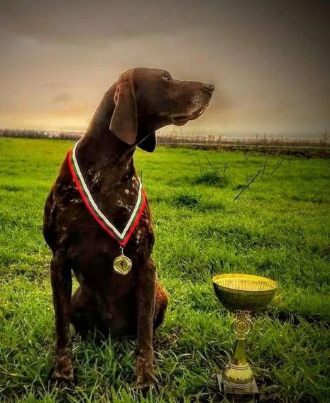 Champion Dog Breeds Hunting Dog Famous Bloodlines Weimaraners German Shorthaired Pointers GSP
