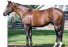 STRONG MANDATE sire of Hip #60 & #38
