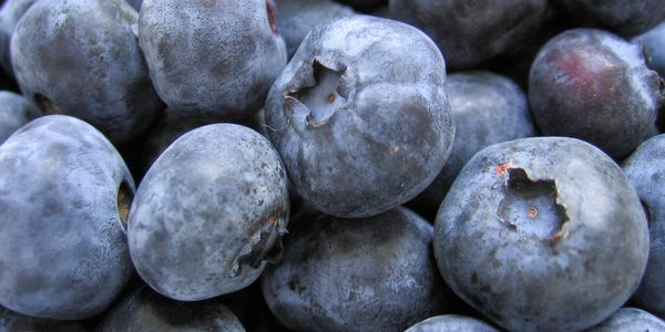 We grow and sell, u-pick, 100% naturally grown Blueberries. No chemicals applied.