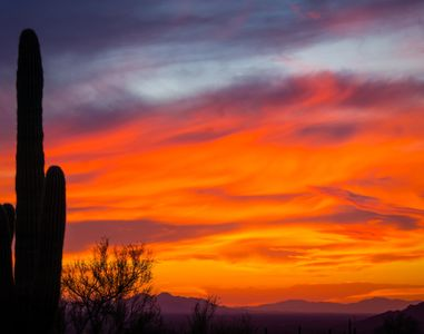 Photo of a sunset with wind whipped orange clouds and a saguaro in the foreground.