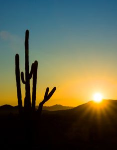 Iconic photo of sunrise with multi-armed saguaro in the foreground and mountains in the background