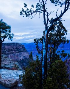 Grand Canyon, snow, tree with sleet, blue hour