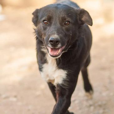 Maya is a 2 year old female collie mix. You may remember at the end of March we were alerted that th