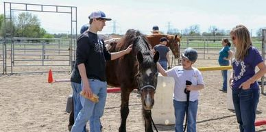 Leadership and Life Skills Development where horses team with participants in interactive learning.
