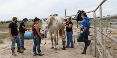 Volunteer opportunities are available at the Horse Rescue. Rewarding, memorable and appreciated.
