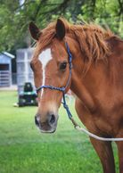 Kota is a horse at Osborne Stables Equine Rescue. Inc. He is now an EAL Horse.