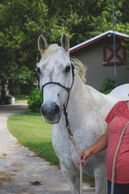 Traveler is a horse at Osborne Stables Equine Rescue, Inc. He is an EAL Horse.