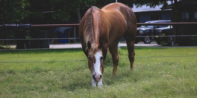 Tess was unwanted when she came to Osborne Stables Equine Rescue, Inc. Now she is an EAL Horse.