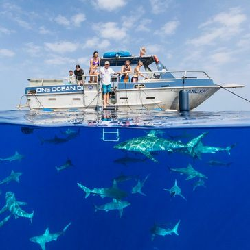 One Ocean Diving, sharks, Directions to One Ocean Diving, Shark dive Hawaii, boat charters Hawaii. Shark Photography.