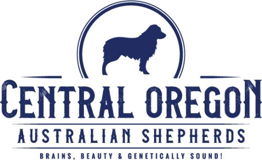 Central Oregon Australian Shepherds
