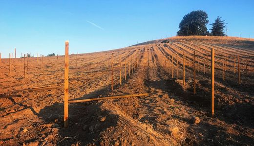 A field with wooden stakes. Planting a vineyard.
