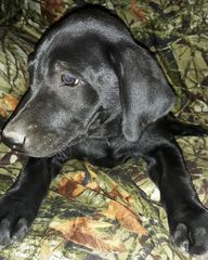Blue Boy fun loving puppy ready for a loving home. SOLD