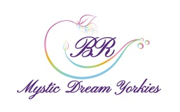 Mystic Dream yorkies