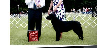 Obedience, Agility, Manners - Best Paw Forward Inc