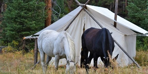 Wyoming horses in a Wyoming hunting camp- Elk Fork Outfitters