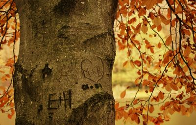 Heart with initials carved in a tree trunk