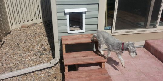 dog door wall