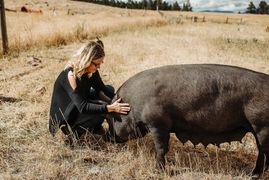 Jamie giving one of the sows a scratch.