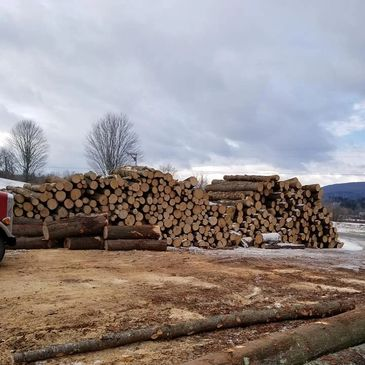 Selection of pine and hemlock logs ready to be delivered to Fontaine Sawmill to create custom milled lumber