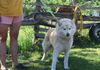 Pal (along with his 3 brothers) is a rescued sled dog we rescued on March 17 2015. His birthday is March 23 2013