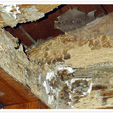 hidden termite damages
