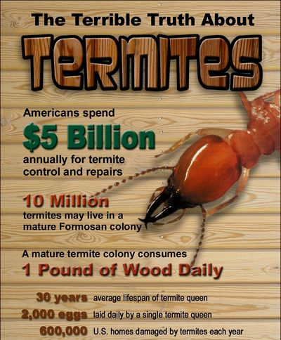 Termite damage warranty