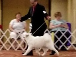 Bella Rose and handler Gary rock the ring in Nebraska.