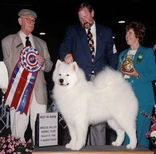 "Galaxy Samoyeds honors the memory of ""Sunny"" MBIS BISS Am/Can/Int'l CH Li'l Paws Sun of Torch CD"