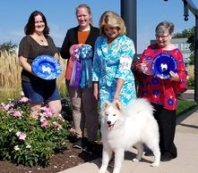 Tesser is Best Futurity Puppy at the Samoyed Club of America 2019 National Specialty!