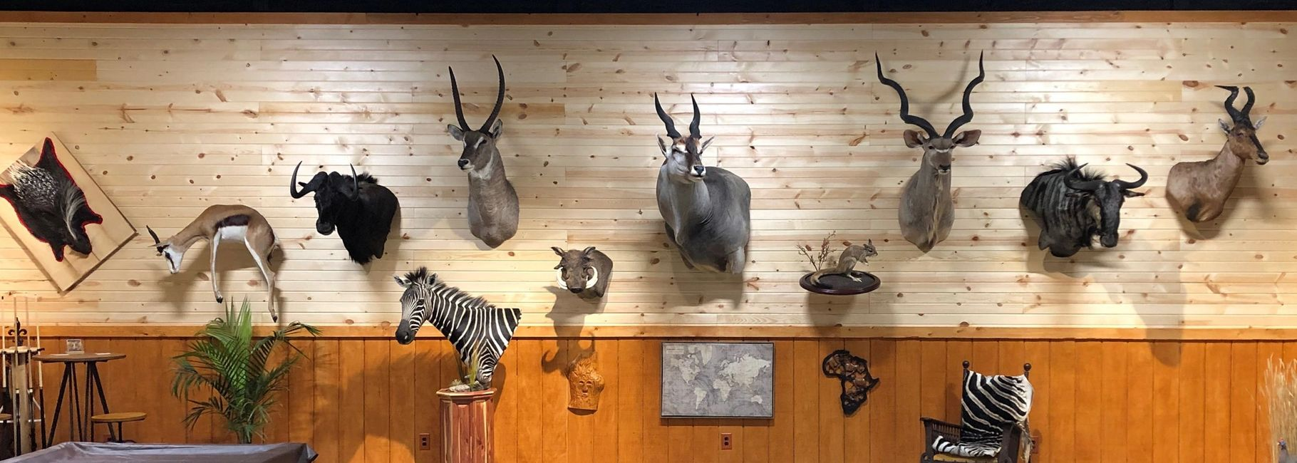 Nature's Image Taxidermy created this trophy room of animals for one of their customers.