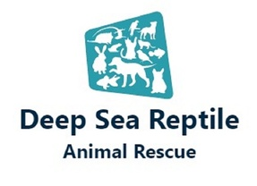 Deep-Sea Reptile Rescue
