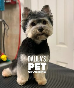 DOG GROOMING IN QUEENS PET GROOMING IN QUEENS DOG GROOMERS IN QUEENS DOG GROOMERS NEAR ME DOG GROOM