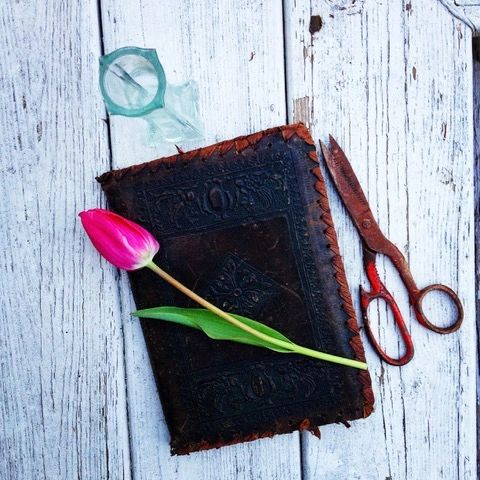 Plant Journaling 101