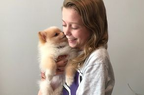 White and Beige Pomeranian Puppy