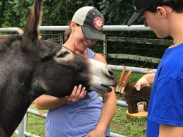 Badonk is a sanctuary donkey. He had been placed  and returned and was shut down. He will live out h