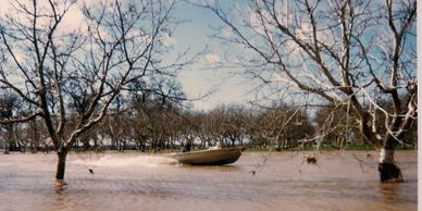Jim Bremner drives a boat through the walnut orchard during a big flood.