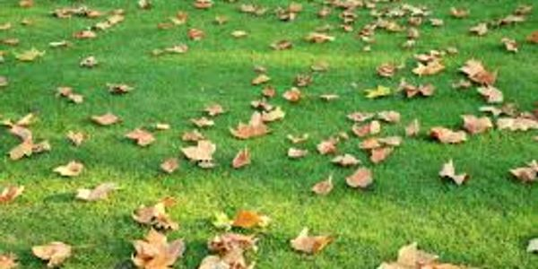 full vacuum of artificial grass, collecting leaves and debris