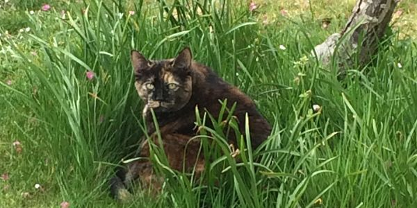 Tiz, making herself a nest in the long grass.