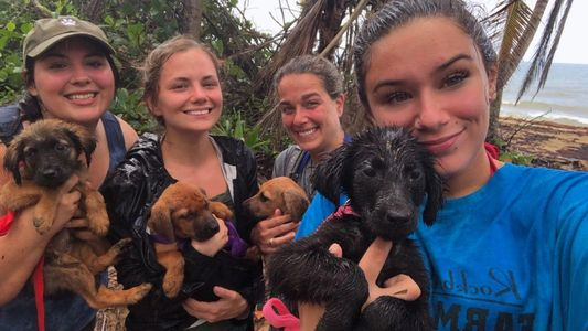 "Volunteers rescuing puppies from ""Dead Dog Beach"""
