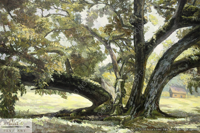 Ancient Louisiana Oak Tree