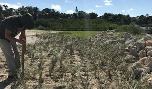 "Bethune-Cookman University plants a research plot of ""living shoreline"" at Menard-May Park."