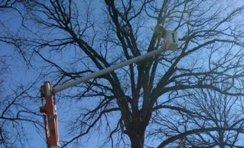 Tree Trimming New Market, IN