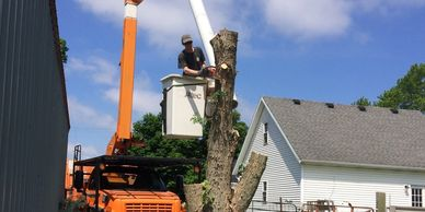 Tree Removal - Busy Beaver Tree Services - Crawfordsville, IN